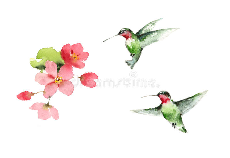 Los colibríes que vuelan alrededor del ejemplo del pájaro de la acuarela de las flores dan exhausto ilustración del vector