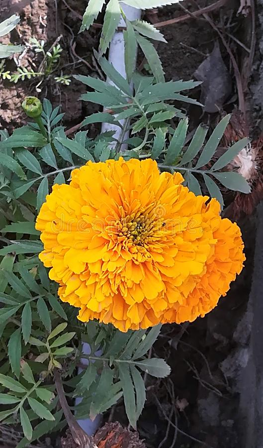 Los colores de Florocent son regalo de la naturaleza foto de archivo