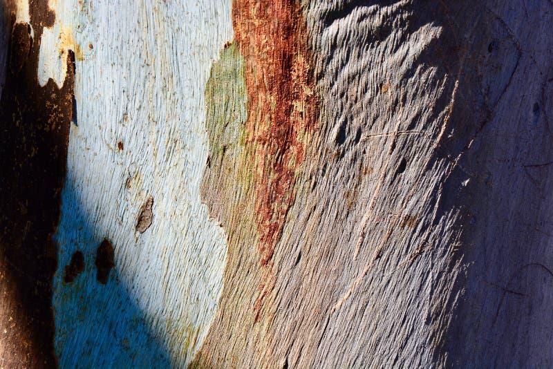 Los colores que ponen en contraste dramáticos y los ricos texturizan el primer de la corteza de árbol foto de archivo