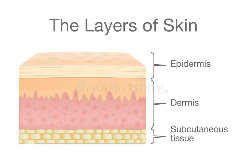 Los componentes de la piel humana acodan en estilo del vector ilustración del vector