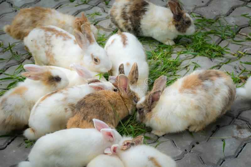 Los conejos adorables están comiendo hierbas en la tierra imagen de archivo
