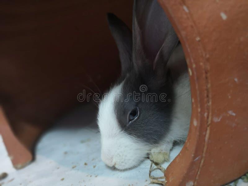 Los conejos son lindos imagen de archivo libre de regalías
