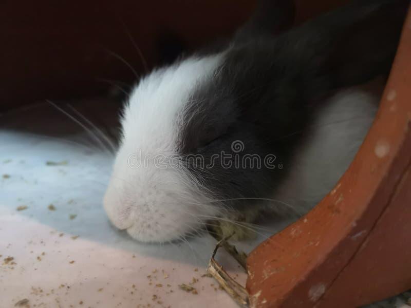 Los conejos son lindos fotos de archivo