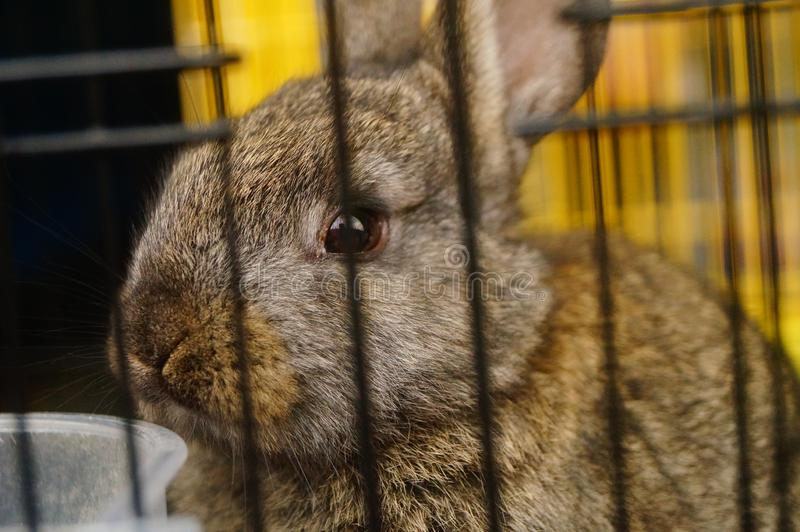 Los conejos son lindos en el mercado del animal doméstico fotografía de archivo
