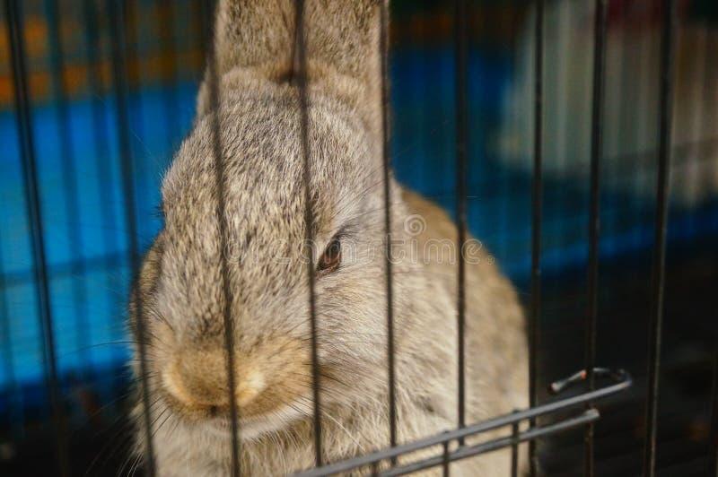 Los conejos son lindos en el mercado del animal doméstico foto de archivo libre de regalías