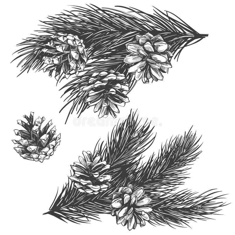 Los conos del pino en la colección de la rama dan a ejemplo exhausto del vector bosquejo realista stock de ilustración