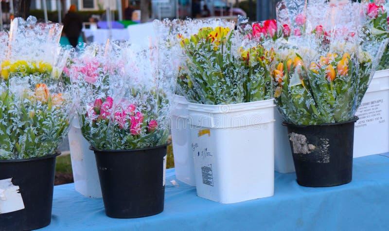 Los cubos de tulipanes aguardan a compradores en el mercado del granjero fotografía de archivo