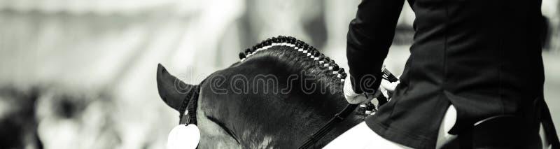 Los dalbies del caballo fotografiaron de detrás en doma sobre el negro del cuello con foto de archivo libre de regalías