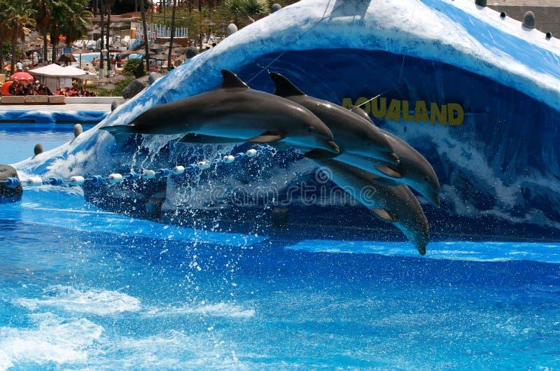 Los delfínes entrenados saltan en el acuario - Aqualand foto de archivo libre de regalías