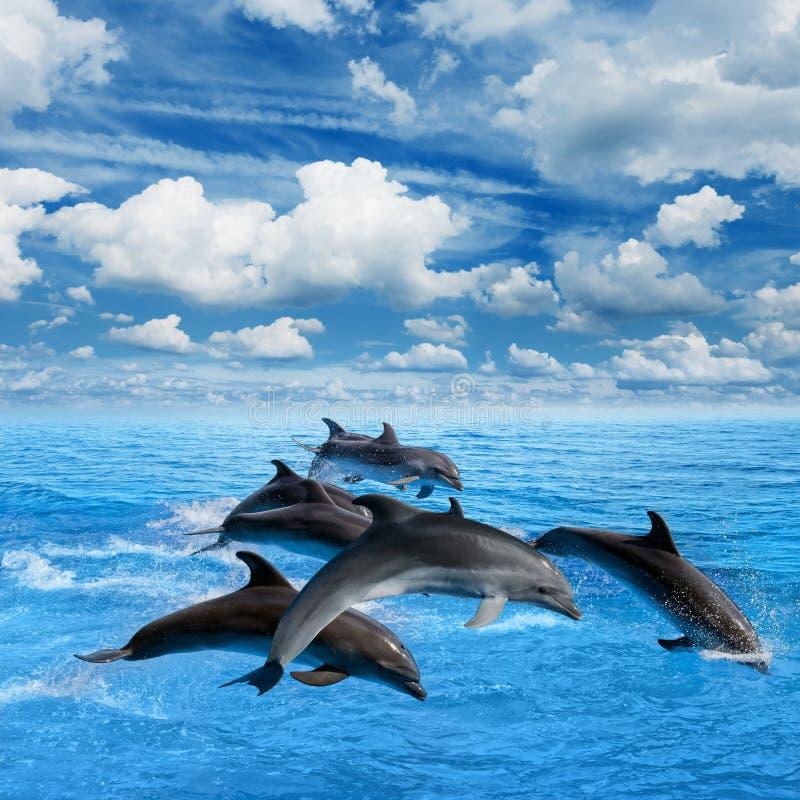 Los delfínes saltan fotos de archivo
