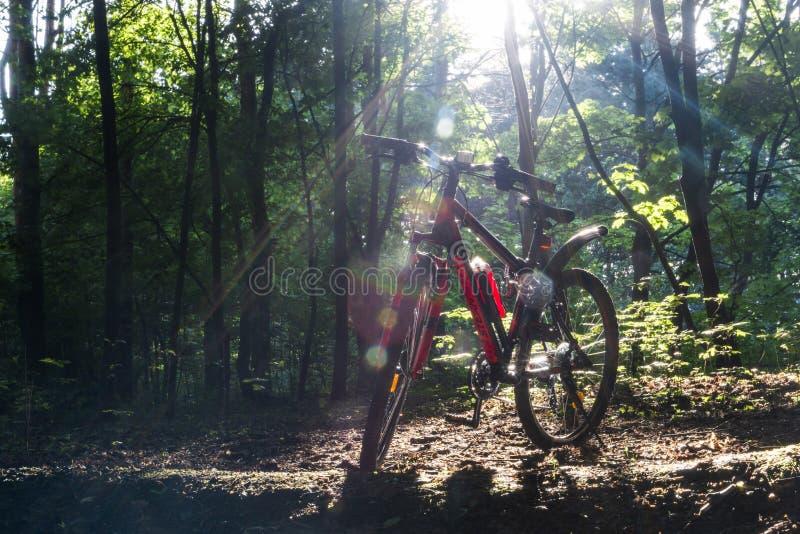 Los deportes bike en el bosque de la primavera en los rayos de la luz del sol imagen de archivo libre de regalías