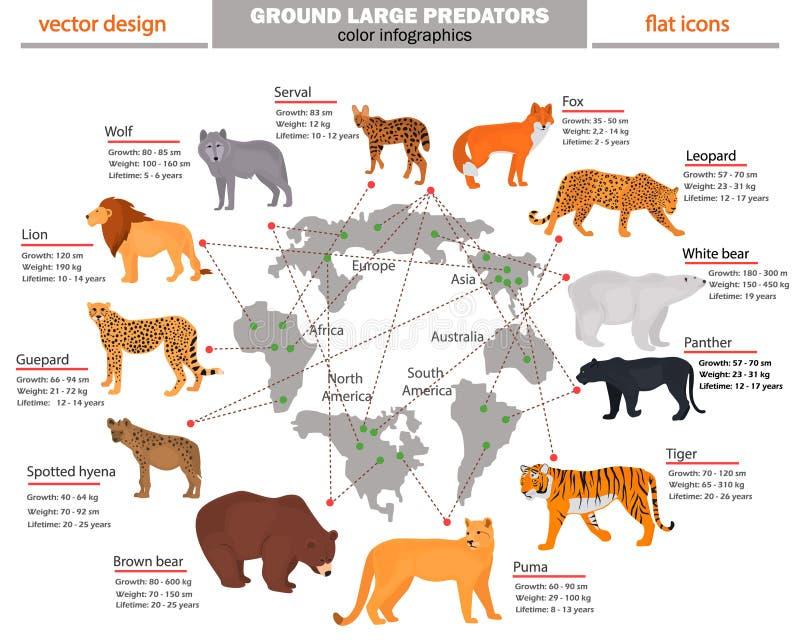 Los depredadores salvajes, su hábitat, el crecimiento, el peso y la longevidad colorean infographics libre illustration