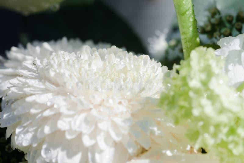 Los detalles de una flor blanca con agua caen el primer imagen de archivo