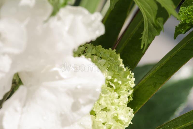 Los detalles de una flor blanca con agua caen el primer fotografía de archivo