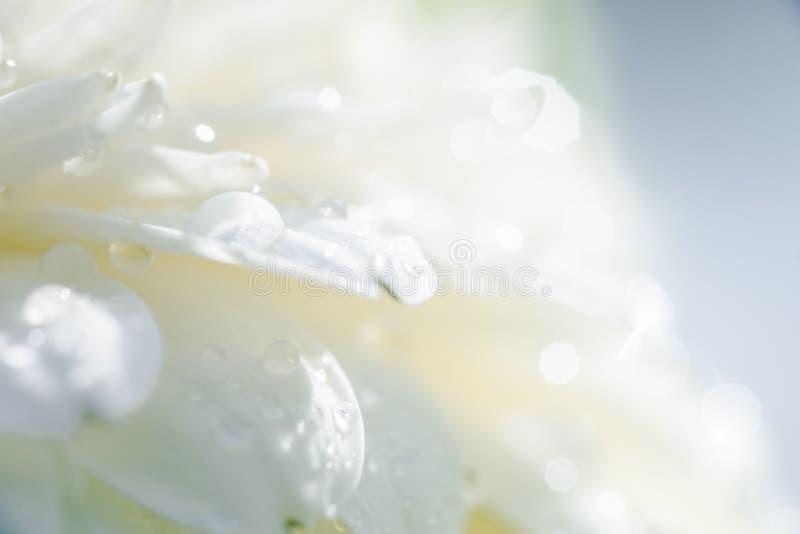 Los detalles de una flor blanca con agua caen el primer fotos de archivo