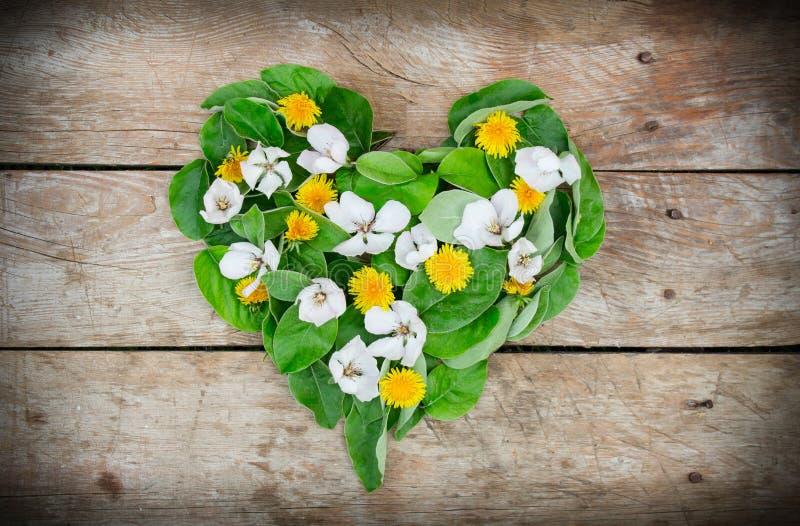 Los dientes de león y las flores del membrillo hicieron el corazón del amor en la tabla de madera imagen de archivo libre de regalías