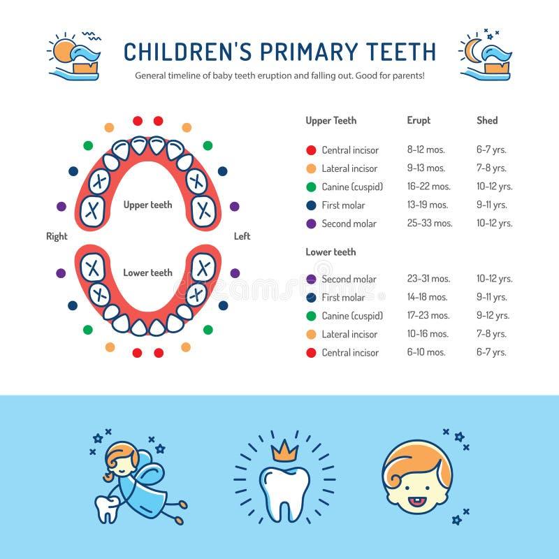 Los dientes primarios de los niños, horario de la erupción de dientes de bebé Infographics de la odontología de niños stock de ilustración