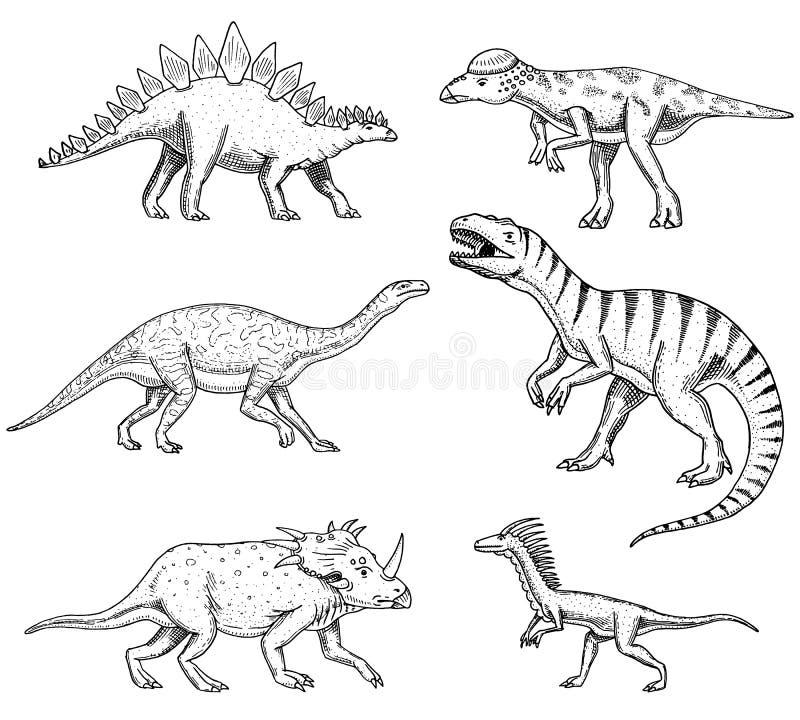 Los dinosaurios fijaron, Triceratops, Barosaurus, rex del tiranosaurio, Stegosaurus, Pachycephalosaurus, deinonychus, esqueletos ilustración del vector
