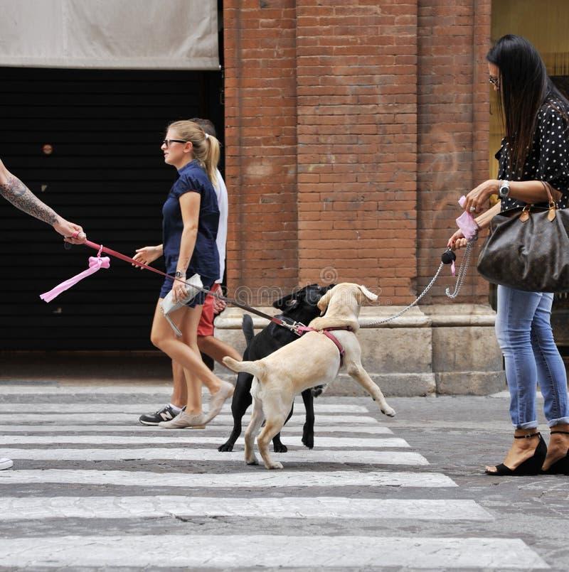 Los dueños del perro se encuentran en una calle del habourside en el centro de ciudad fotografía de archivo