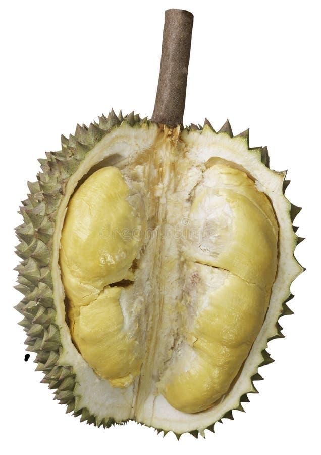 Los Durians cortaron a través para ver la carne amarilla En el blackground blanco fotos de archivo libres de regalías