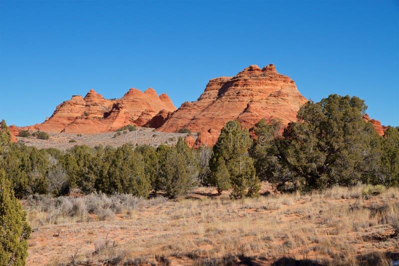 Los E.E.U.U., Arizona: Motas del coyote del sur - paisaje con las motas y los enebros de la piedra arenisca fotografía de archivo libre de regalías