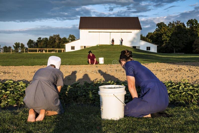 LOS E.E.U.U. - Ohio - Amish imagen de archivo