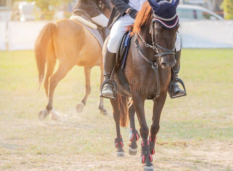 Los Equestrians durante entrenamientos calientan para preparar la competencia en circuito de carreras imagen de archivo