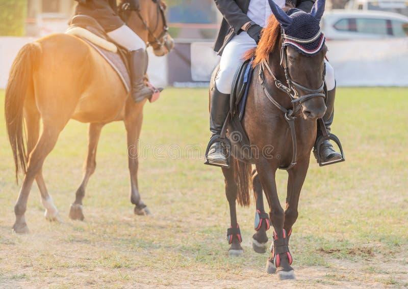 Los Equestrians durante entrenamientos calientan para preparar la competencia en circuito de carreras imagenes de archivo