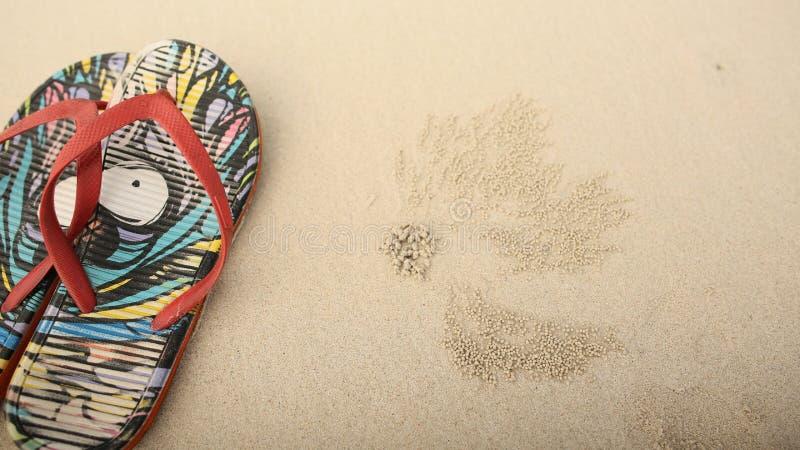 Los esquistos multicolores mienten en la arena al lado de las pistas de cangrejos fotografía de archivo