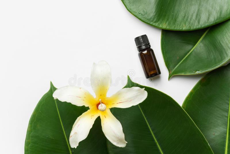 Los ficus mojados grandes dejan a flor tropical la vela de la botella de aceite esencial en el fondo blanco Cuidado org?nico del  imagenes de archivo