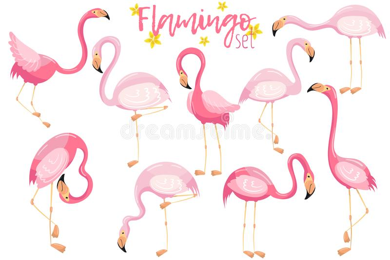 Los flamencos rosados elegantes hermosos fijaron, los ejemplos tropicales exóticos del vector de los pájaros ilustración del vector