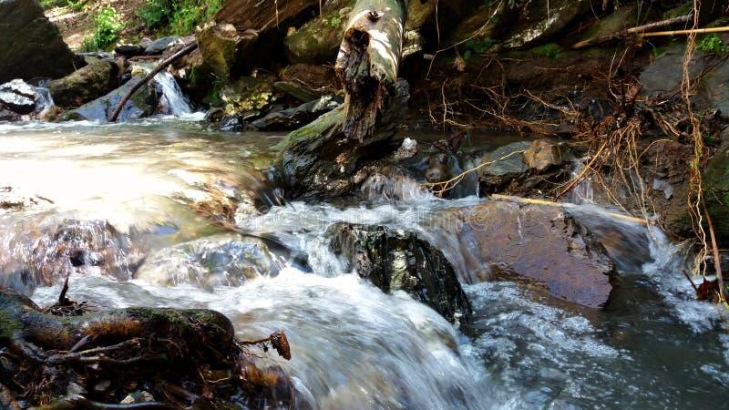 Los flujos del río liberan en el bosque fotos de archivo libres de regalías