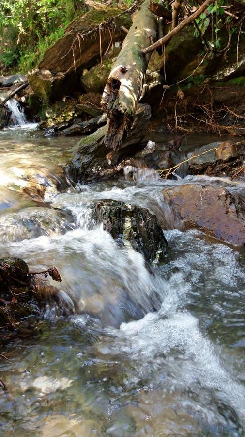 Los flujos del río liberan en el bosque foto de archivo libre de regalías
