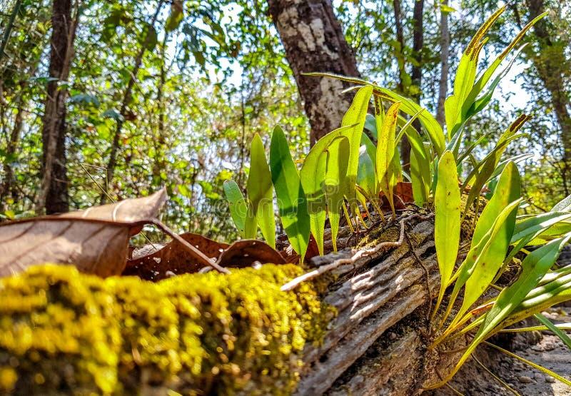 Los foliages jovenes de la orquídea crecen en el registro muerto fotografía de archivo libre de regalías