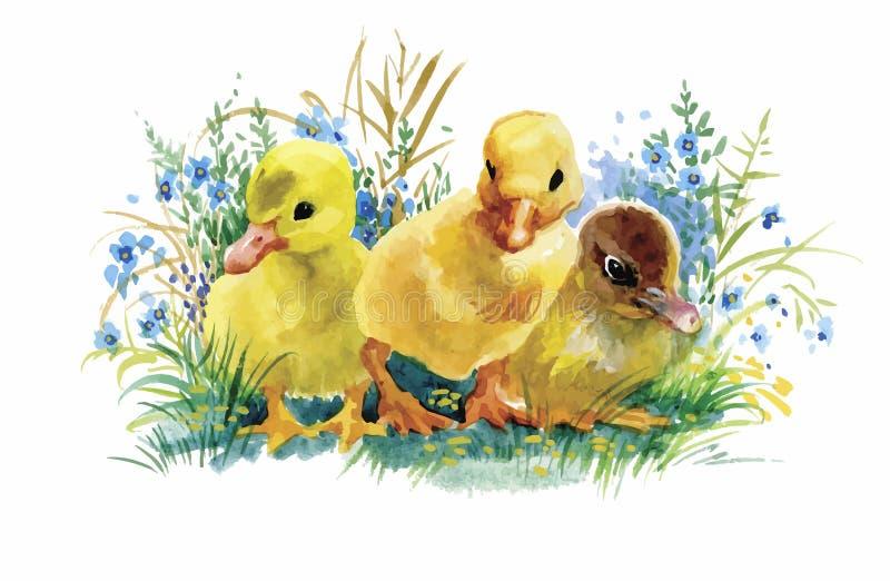 Los gansos se reúnen la natación en el ejemplo del vector de la acuarela de la charca stock de ilustración