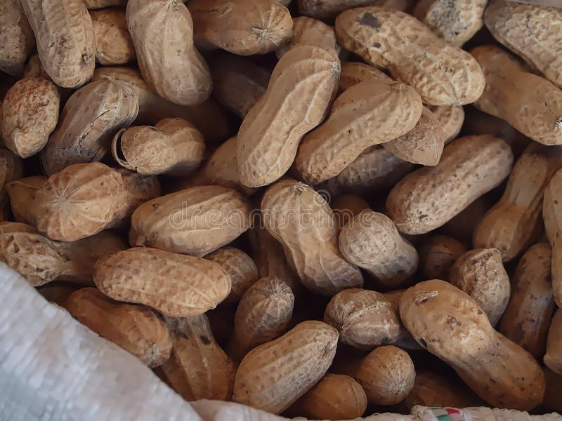Los ganze Erdnüsse mit Oberteil stockfoto