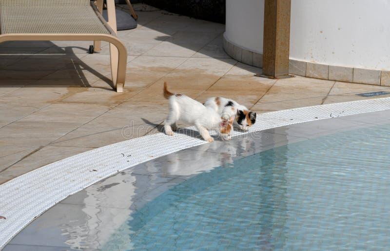 Los gatitos beben el agua de la piscina afuera imagenes de archivo