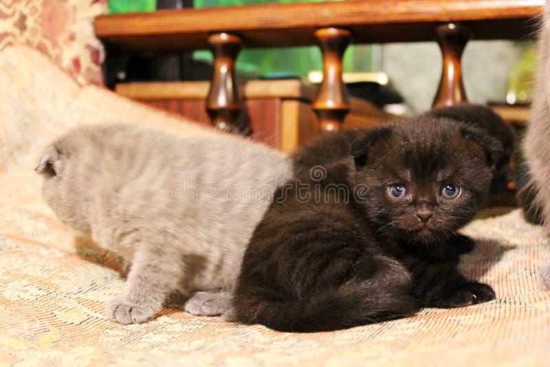 Los gatitos están mintiendo en el sofá fotografía de archivo libre de regalías
