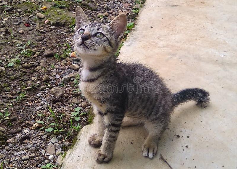 los gatitos necesitan cuidado de sus madres para las primeras semanas de sus vidas fotos de archivo libres de regalías