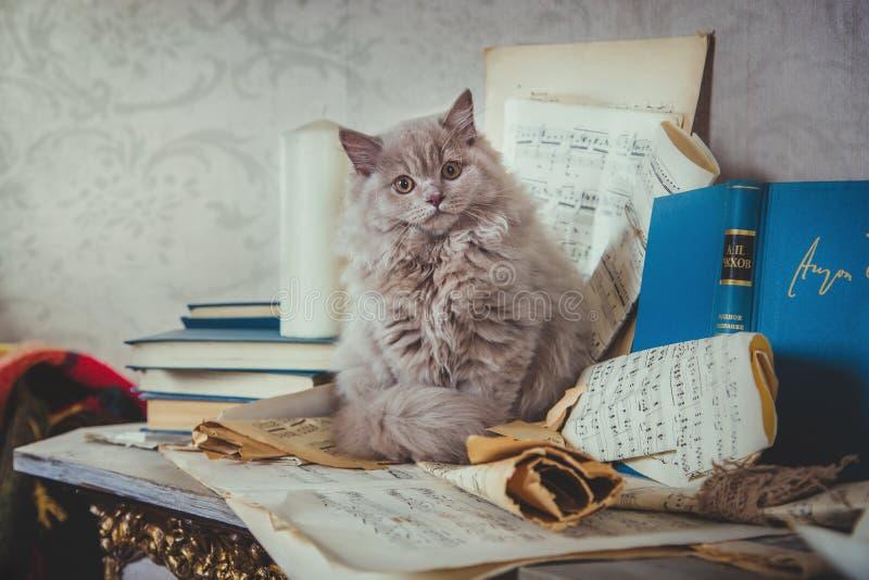 Los gatitos son vintage de la chimenea fotos de archivo