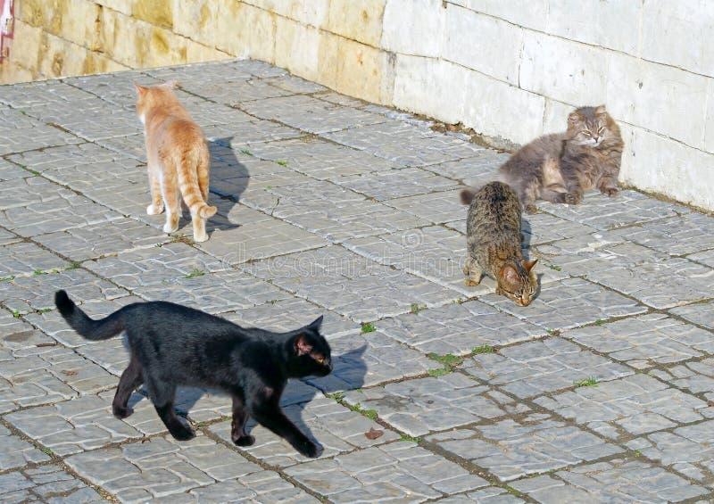 Los gatos coloridos caminan foto de archivo