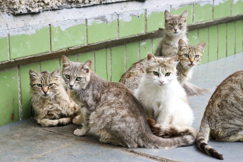 Los gatos sin hogar de la calle han amontonado juntos en un paquete, y están mirando prudentemente en el marco con cautela imagen de archivo libre de regalías