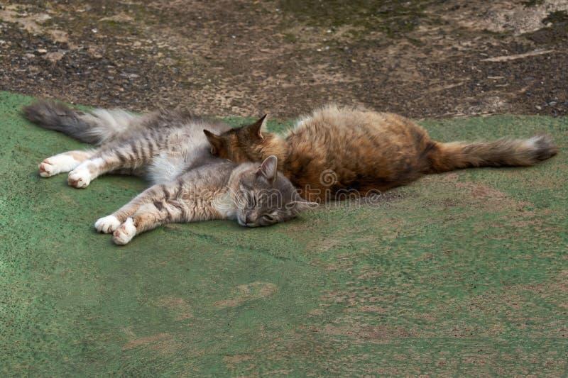 Los gatos sin hogar se calientan en el sol imagen de archivo