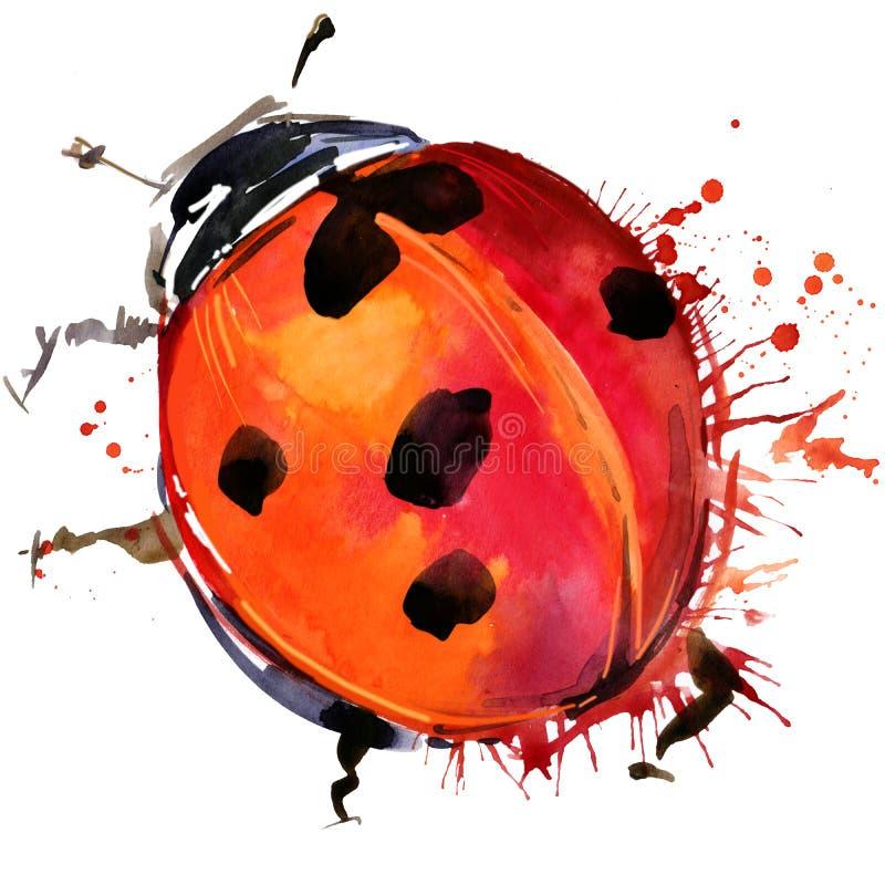Los gráficos de la camiseta del escarabajo de mariquita, ejemplo de la mariquita con la acuarela del chapoteo texturizaron el fon libre illustration