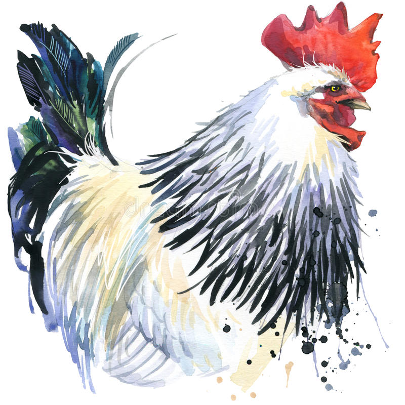 Los gráficos del gallo, ejemplo del gallo con la acuarela del chapoteo texturizaron el fondo fashio del gallo de la cría de la ac stock de ilustración