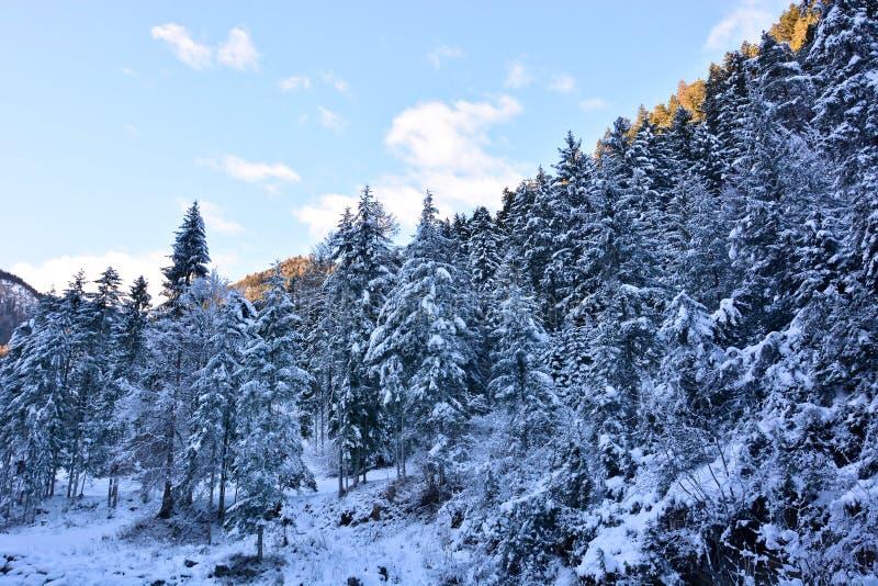 Los grandes bosques del norte cubierto con una manta de la nieve imagen de archivo