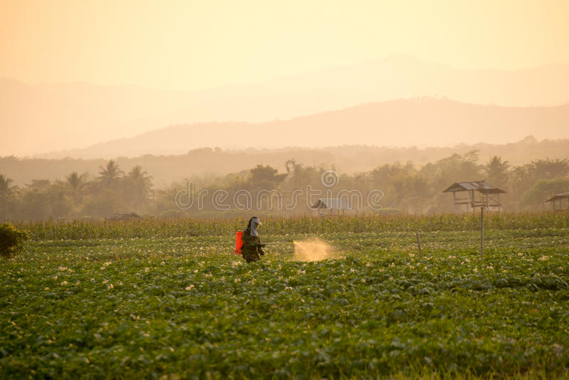 Los granjeros están rociando los pesticidas en campos de la patata foto de archivo libre de regalías