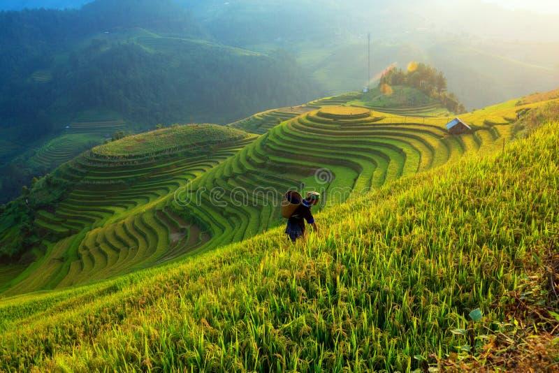 Los granjeros están trabajando en su granja en la montaña l de la terraza del campo del arroz foto de archivo