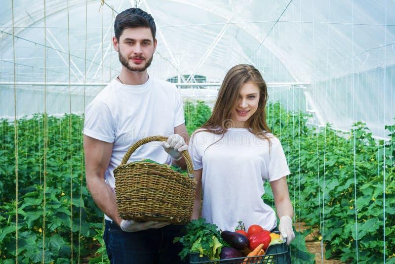 Los granjeros jovenes están cosechando verduras orgánicas foto de archivo