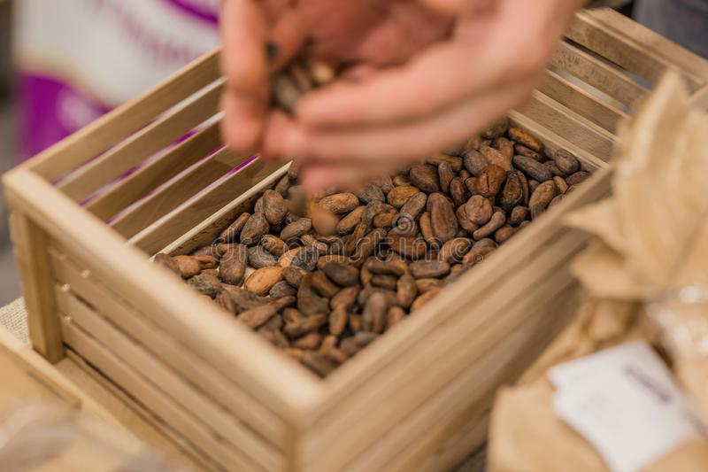 Los granos de cacao frescos se vierten en una caja de madera imagen de archivo
